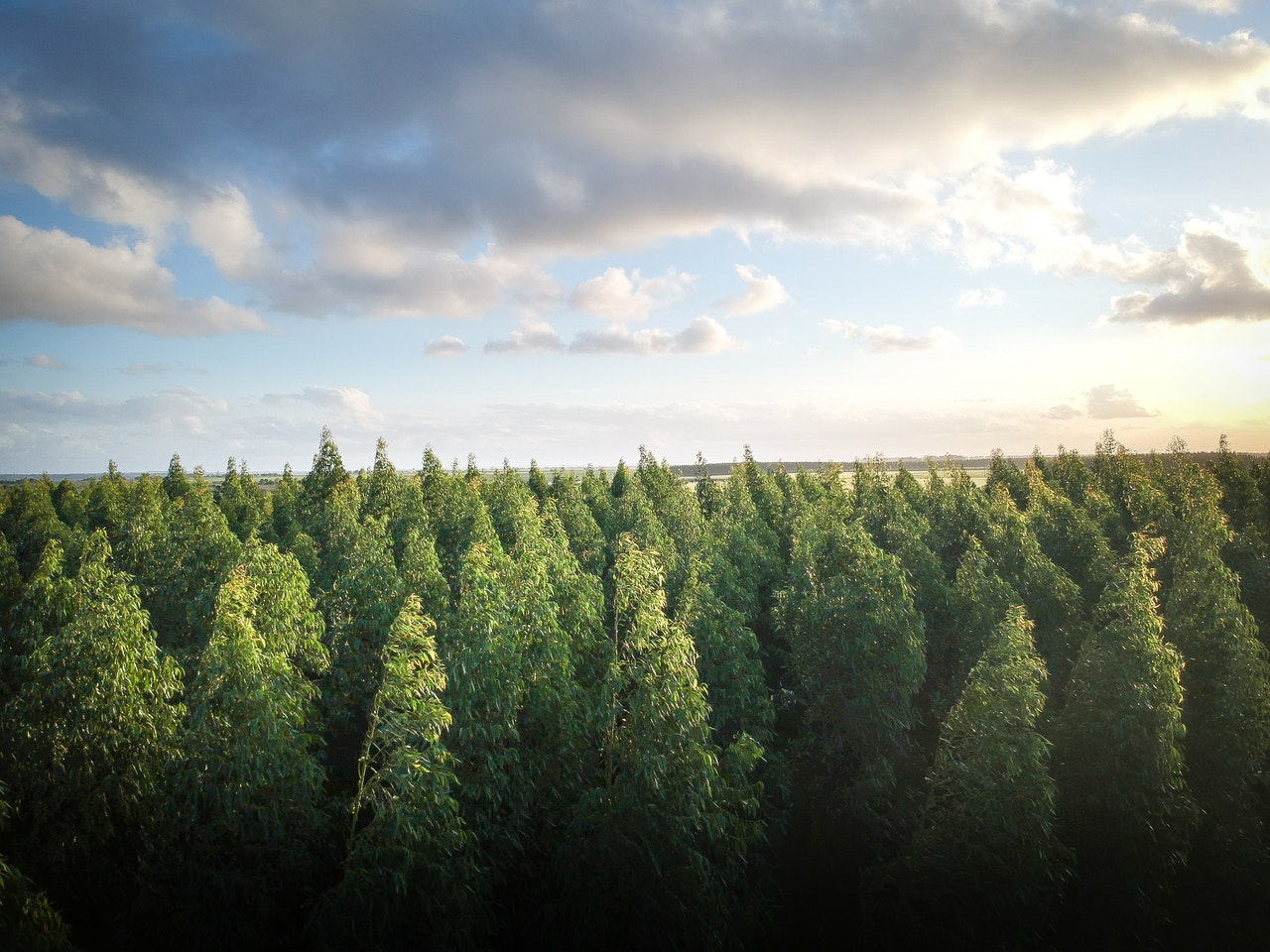 Planting forests for sustainable development